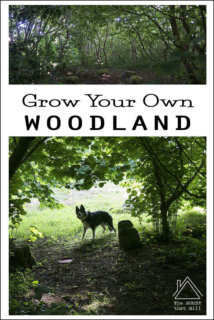 The House that Will | How to Grow a Woodland